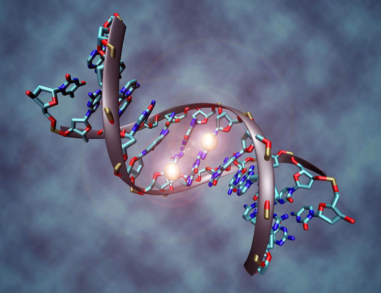 ADN. Imagen recogida de phebase.webs.com